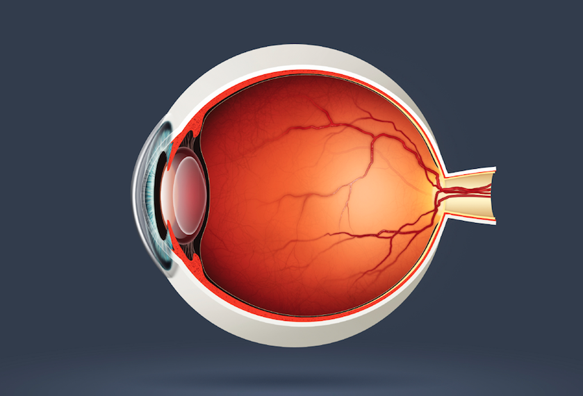 IOP Increases, Then Decreases Within 30 Minutes of Intravitreal Bevacizumab Injection